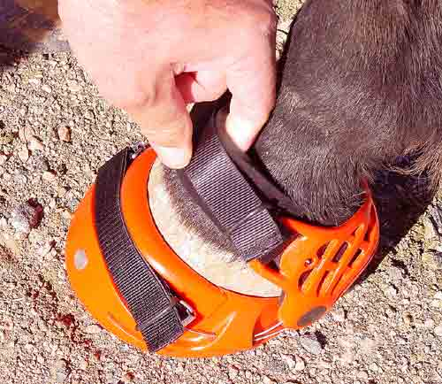 Renegade Hoof Boots Strap Clearance