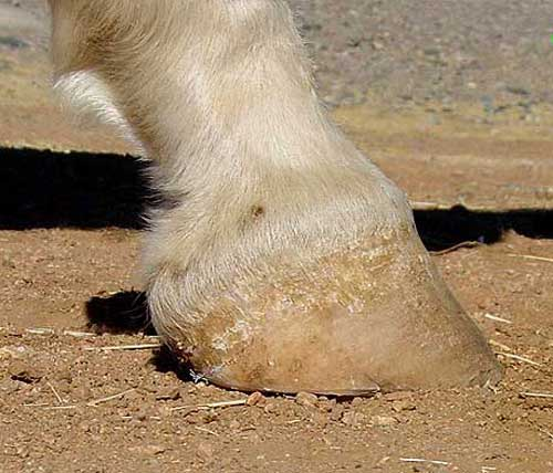 Renegade Hoof Boots Natural Trimmed