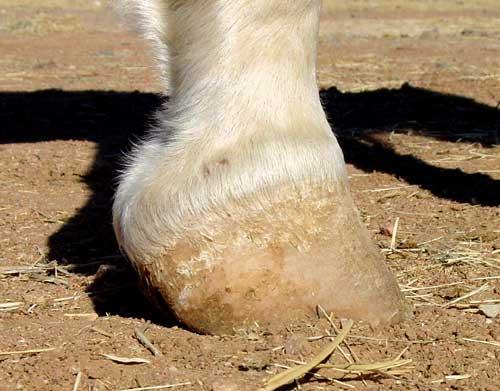 Renegade Hoof Boots Untrimmed High Heel