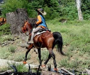 Horse Hoof Boots Tevis