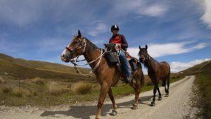 Horse Trail Hoof Boots