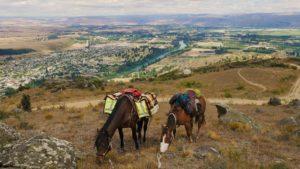Grazing Horses Hoof Boots