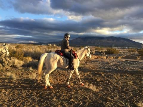 Horse Wearing Renegade Hoof Boots